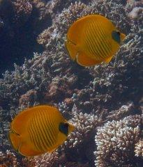 Red Sea 08